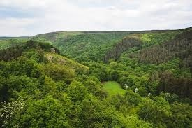 Paysage au cœur de l'Ardenne